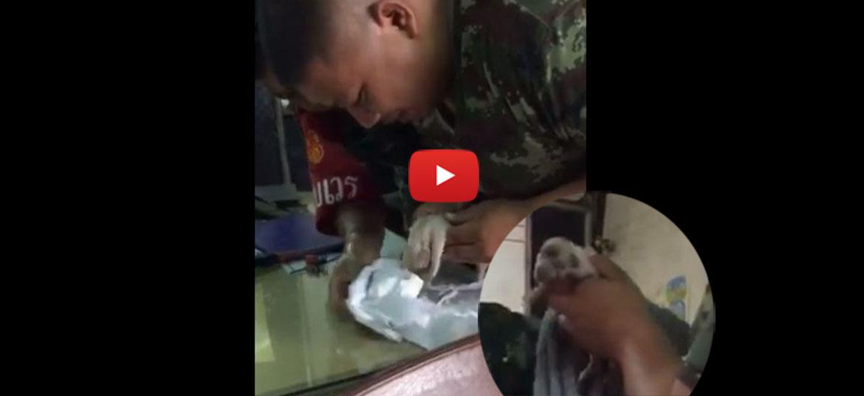 Anh lính hô hấp nhân tạo cho chú chó con