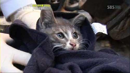 Chú mèo con mang thịt về cho mèo mẹ đã chết