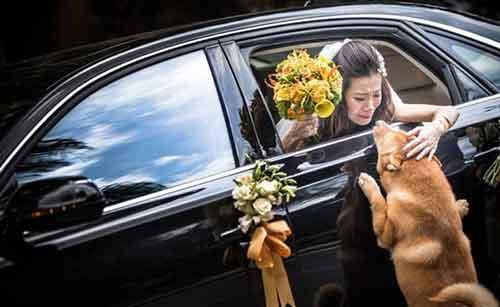 Cô chủ đi lấy chồng :(