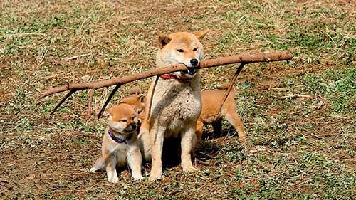 A Tale Of Mari and Three Puppies (2007) - Phim về loài chó cảm động