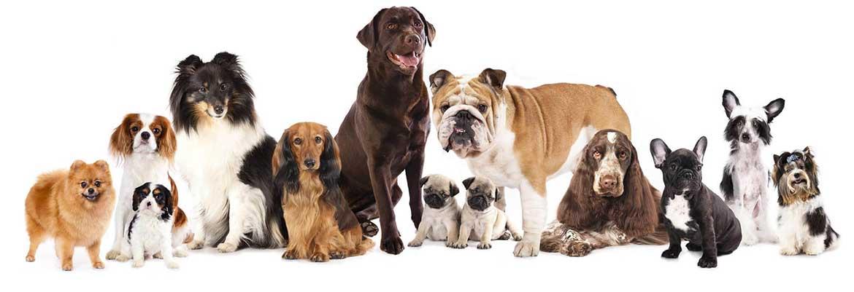 Cách tính tuổi cho chó nhà bạn như thế nào`