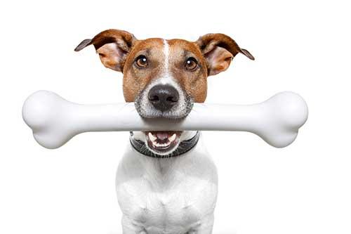 cách xử lý chó bị hóc xương