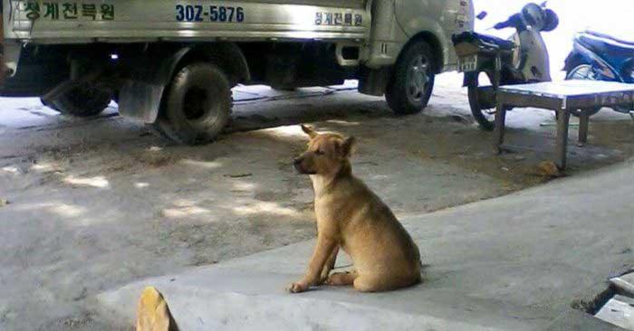 chú chó nuôi để thịt vẫy đuôi mừng rỡ với chủ một cách ngây thơ