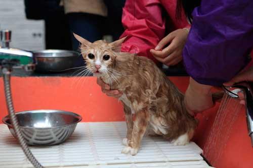 chuẩn bị đồ tắm cho mèo đúng cách