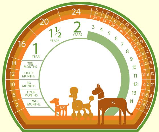 Biểu đồ tính tuổi của chó