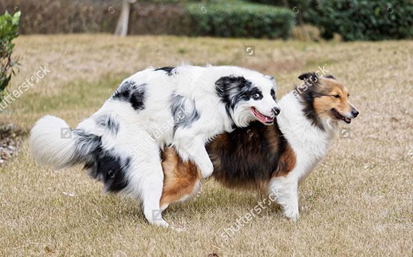 Cách chăm sóc chó salo là gì