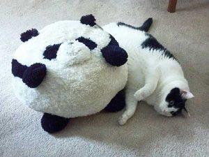 Mèo béo 9