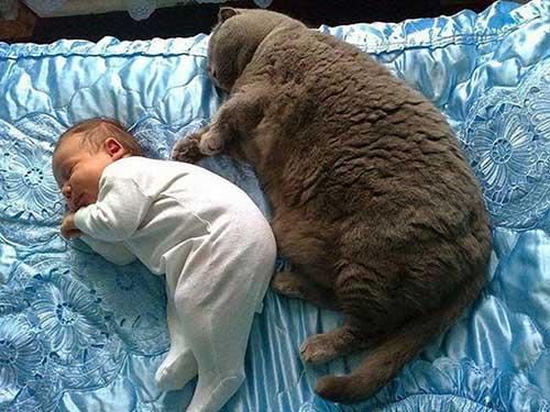 Mèo béo 7