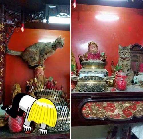 Con mèo láo toét leo lên bàn thờ nghịch ngợm
