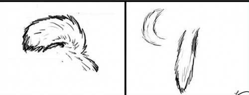 Phân biệt chó Alaska và Husky qua đuôi