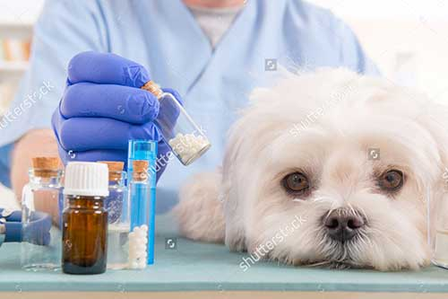 Thuốc tẩy giun cho chó tốt nhất