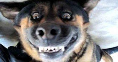 Tuyển tập những tiếng cười bá đạo của chó