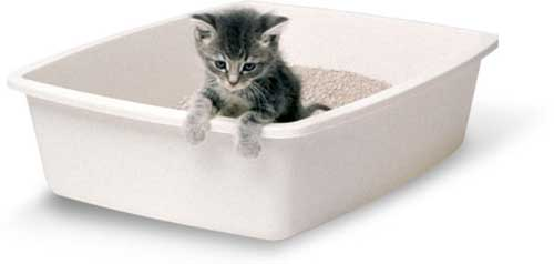 Cách dạy mèo đi vệ sinh đúng chỗ cho chuẩn