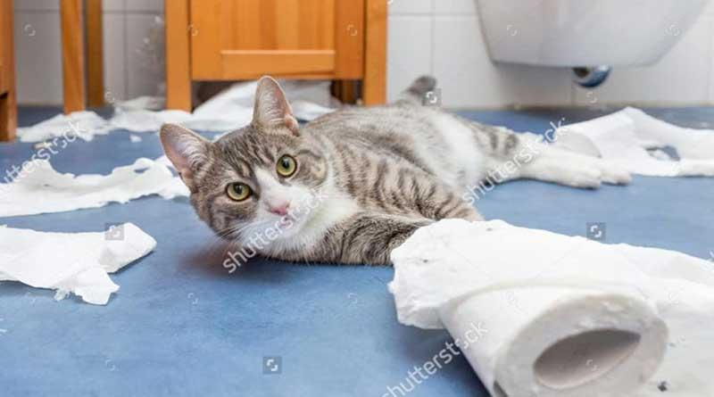 Cách dậy mèo đi vệ sinh đúng chỗ như thế nào