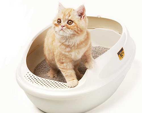 cách dạy mèo đi vệ sinh đúng chỗ