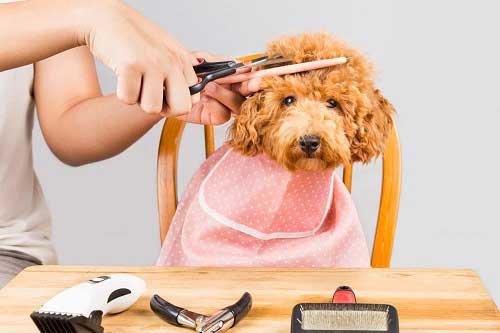 Chế độ chăm sóc đặc biệt sau khi cạo lông máu