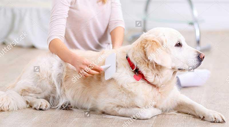 Chó bị rụng lông và cách chữa trị