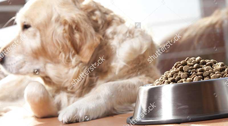 Chó bỏ ăn mệt mỏi và cách chữa trị