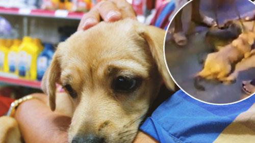 Chú Ngọc Anh đã nhận nuôi 2 em cún trong video
