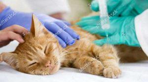 Mèo bị tiêu chảy và nôn liên tục