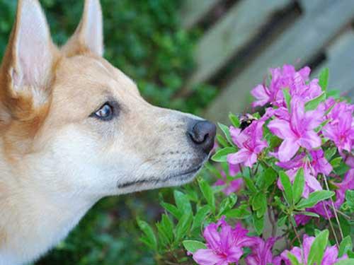 Phòng tránh chó bị ong đốt