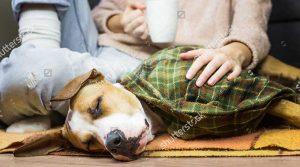 Chó thở gấp khò khè, tại sao