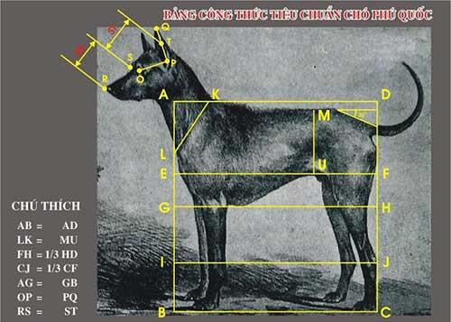 Đặc điểm của chó Phú Quốc Việt Nam