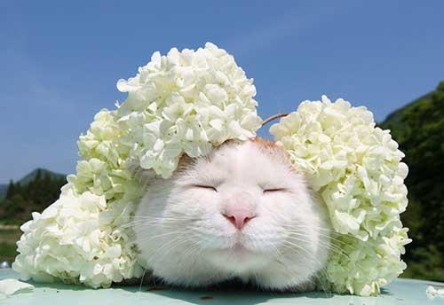 Chú mèo kute Shironeko
