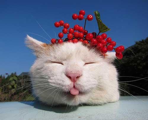 Mèo Shironeko