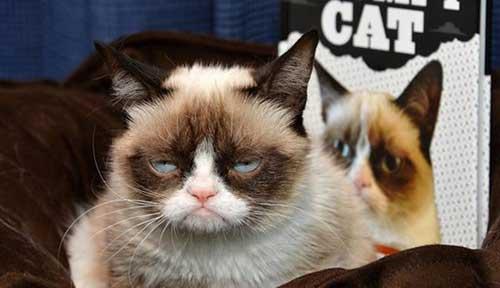 Chú mèo -Tarda Sauce