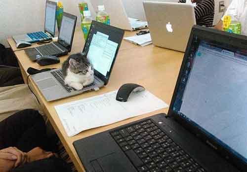 Công ty Nhật thưởng tiền khi nuôi mèo vô gia cư