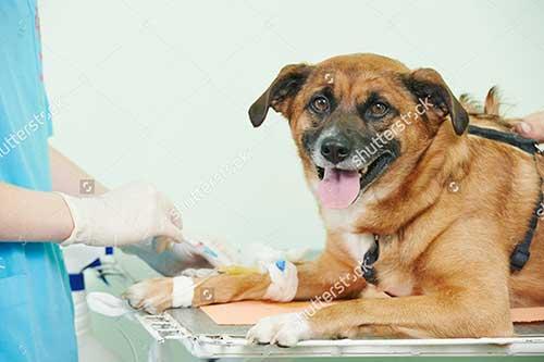 Tìm hiểu về triệu chứng chó bị tiêu chảy