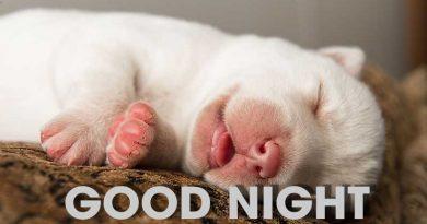 Cách làm chú cún nhà bạn ngủ ngon mỗi đêm