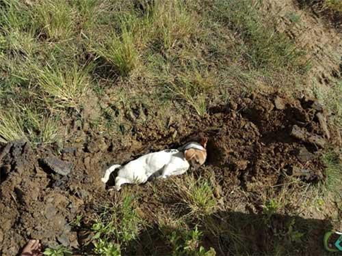 Chú chó bị đầu độc tới chết chia tay chủ nhân lần cuối