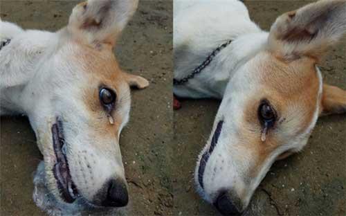 Chú chó bị đầu độc dã man