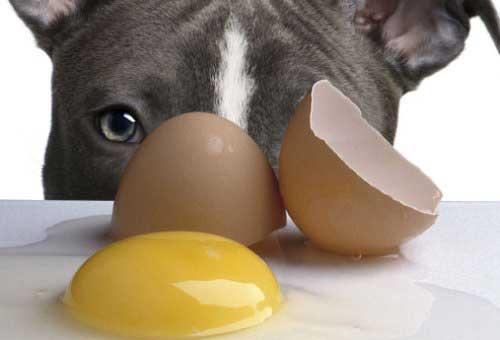 Có nên cho chó ăn trứng vịt lộn không