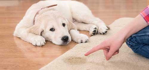 Kết quả hình ảnh cho chó đi vệ sinh