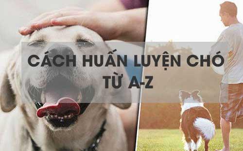 Cách dạy chó từ A-Z