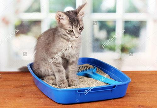 Lựa chọn cát vệ sinh cho mèo