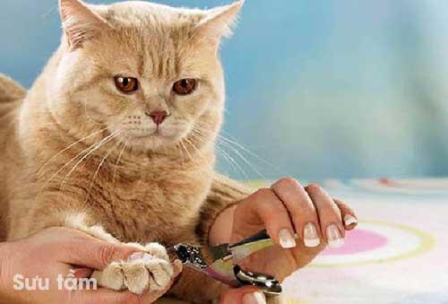 Lời khuyên khi cắt móng chân cho mèo