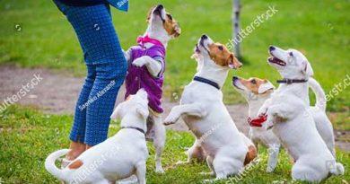 Các giống chó cảnh giá rẻ dưới 1 triệu