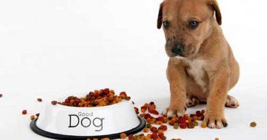 Thức ăn khô cho chó