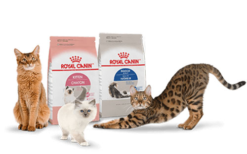 Royal Canin cho mèo