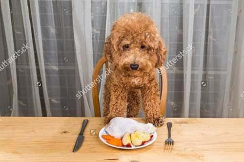Thức ăn cho chó con tươi