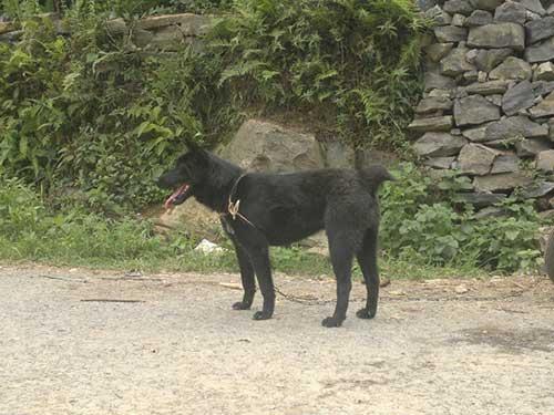 Tính cách của chó Mông Cộc