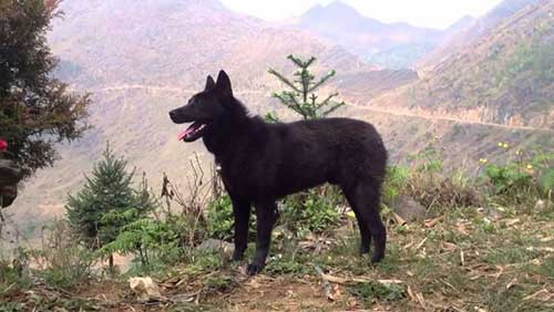Giá của chó Mông Cộc