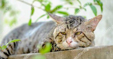 Tuổi thọ của mèo là bao nhiêu