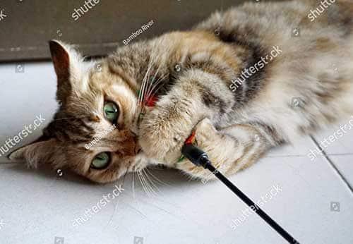 Đồ chơi cho mèo giảm stress và giúp mèo thư giãn