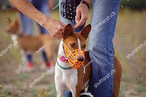 Rọ mõm chó ngăn cún ăn rác và thức ăn có hại