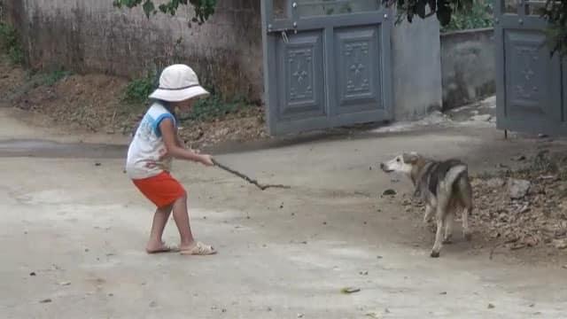chó dữ tấn công